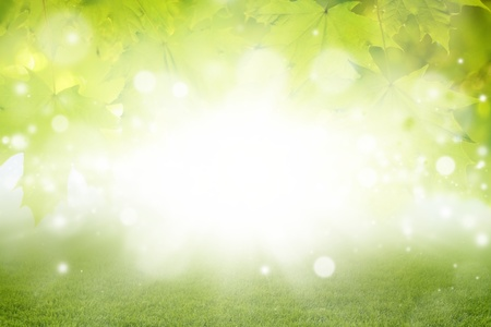 green land: Abstract eco background - green leaves, grass, bright sun