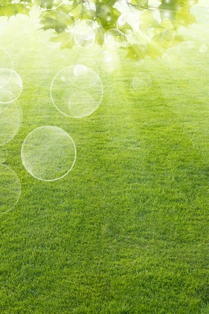 Abstract background with green leaves, field, grass and bright sunlight Stock Photo - 12907712