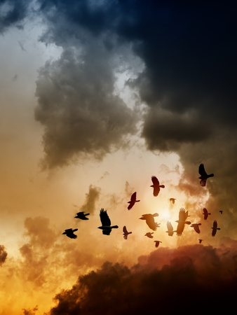 Sunset, flock of flying ravens, crows in dark sky photo
