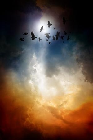 corvo imperiale: Tramonto, stormo di corvi che volano, corvi in ??cielo scuro Archivio Fotografico