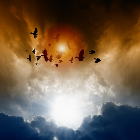 Sunset, flock of flying ravens, crows in dark sky Stock Photo - 16007440