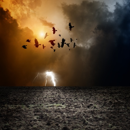 Big arable field, dark stormy sky with lightning, flock of flying ravens, crows in dark sky photo