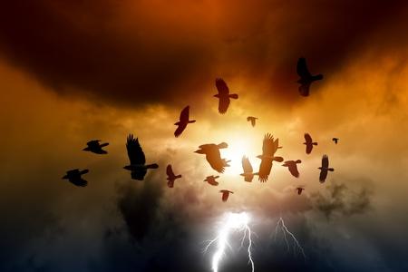 corvo imperiale: Tramonto, stormo di corvi che volano, corvi in ??cielo scuro, un fulmine luminoso