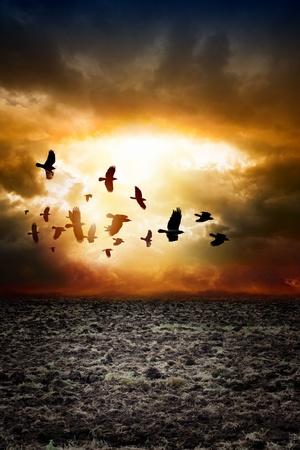 raven: Big arable field, dark sunset sky, flock of flying ravens, crows in dark sky Stock Photo