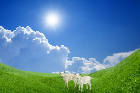yeanling: Two kids on green field, blue sky, white clouds, bright sun
