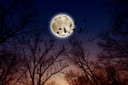 Night sky with full moon, stars, flock of flying ravens, crows. Elements of this image furnished by NASA photo