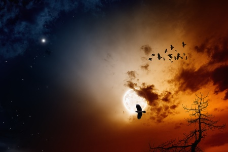 Dark sunset sky with full moon, stars, flock of flying ravens, crows. photo