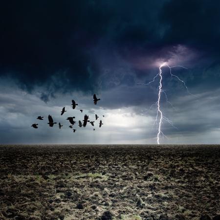 cuervo: Oscura del paisaje - un rayo luminoso, bandada de cuervos que vuelan, los cuervos de mal humor oscuro cielo, la tierra agr�cola