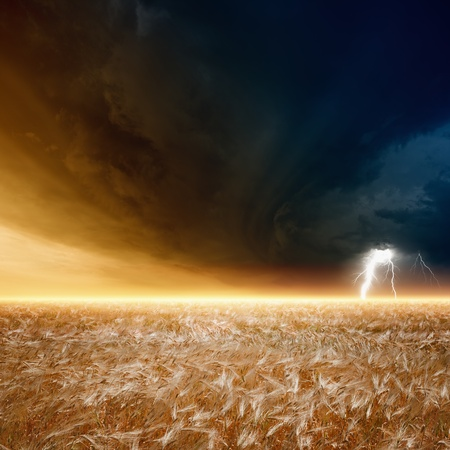 dark clouds: Nature force background - field of ripe barley, wheat, dark stormy sky with lightning, thunderbolt Stock Photo