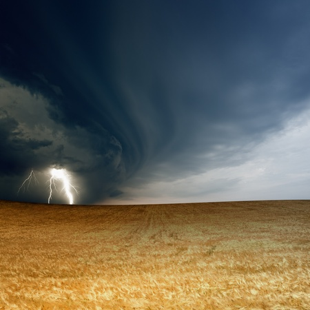 force of nature: Nature force background - field of ripe barley, wheat, dark stormy sky with lightning, thunderbolt Stock Photo