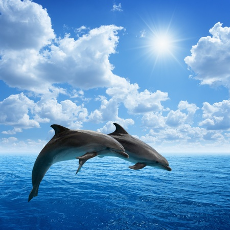 Dolphins jumping, blue sea and sky, white clouds, bright sun