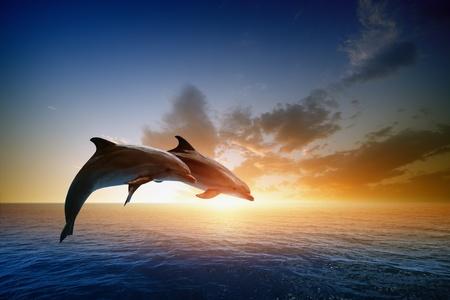 delfin: Para skoki delfiny, morze piękny zachód słońca