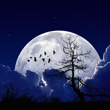 Night sky with full moon, stars, flock of flying ravens, crows, old tree. Elements of this image furnished by NASA photo