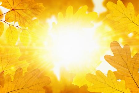 Beautiful nature background - yellow maple and oak leaves, bright sun, season fall