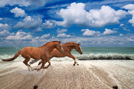 Two horses running along seashore,  blue sea and sky, waves, white clouds, picture for chinese year of horse 2014 photo