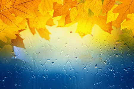 Autumn background - maple and oak leaves, window glass with rain drops, rainy day, season is fall photo