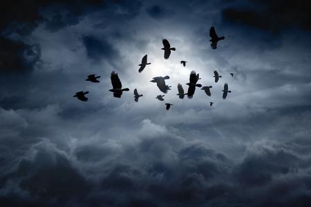 bandada pajaros: Bandada de cuervos que vuelan, los cuervos en el cielo cambiante oscuro Foto de archivo
