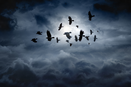 Flock of flying ravens, crows in dark moody sky