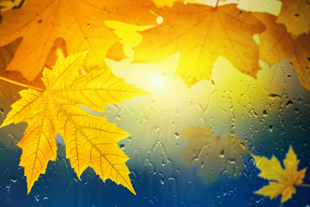 Autumn background - maple leaves outside window glass with rain drops, rainy day, season is fall Imagens