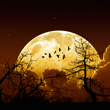 Night sky with yellow full moon, stars, flock of flying ravens, crows, tree silhouette. Elements of this image furnished by NASA Foto de archivo