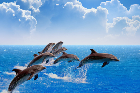 leap: Jumping dolphins, blue sea and sky, white clouds
