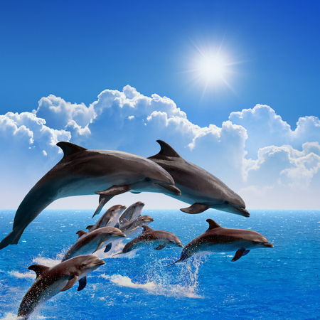 Jumping dolphins, blue sea and sky, white clouds, bright sun