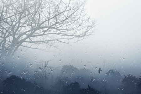 rainy season: Moody grey fall background - trees in fog, rainy day, foggy day, raindrops flowing on window, depression from fall weather