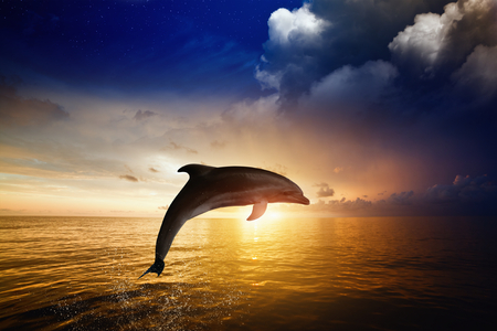 Dolphin jumping, red sunset over sea, glowing horizon