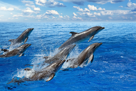 dolphin jumping: Jumping dolphins, blue sea and sky, white clouds
