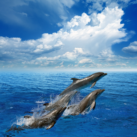 Dolphins jumping in clear blue sea, white clouds in sky