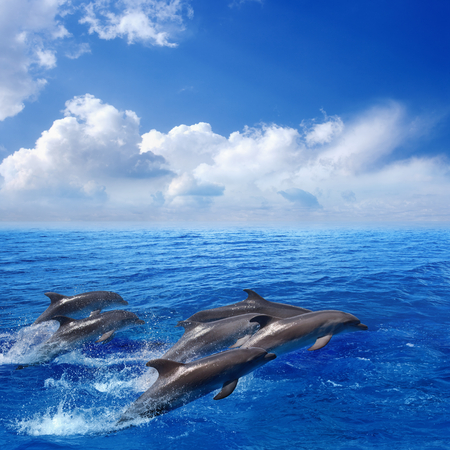 Marine life photograph - dolphins jumping in blue sea, white clouds in sky