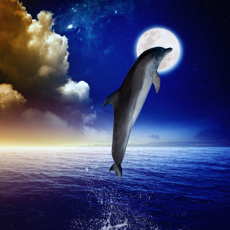Dolphin jumping, full moon above sea, glowing clouds and horizon. Elements of this image furnished by NASA photo