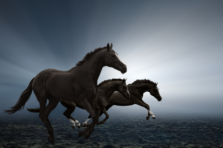 Three black horses running on field, bright light shines through fog 스톡 콘텐츠
