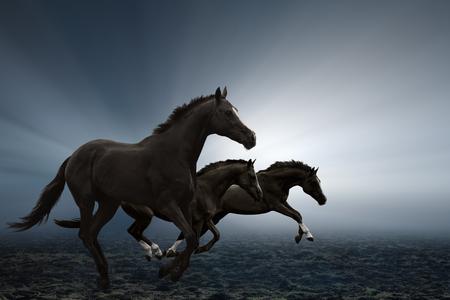 Three black horses running on field, bright light shines through fog Foto de archivo