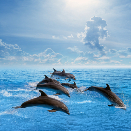 Marine life, dolphins jumping in blue sea, white clouds in sky