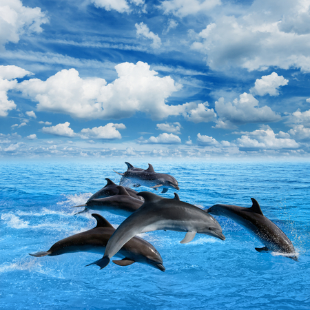 Dolphins jump in blue sea, white clouds in sky
