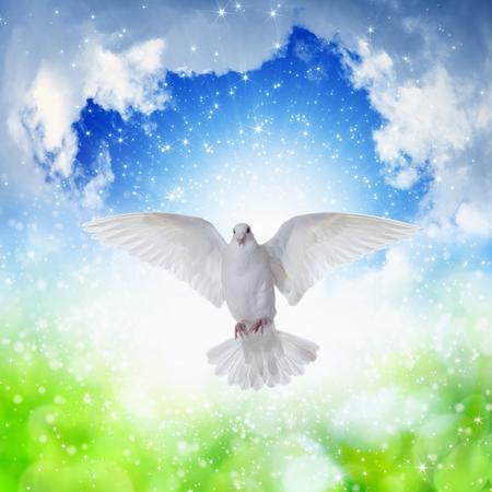Heilige Geest kwam neer als witte duif, heilige geest duif vliegt in de blauwe hemel, helder licht schijnt uit de hemel, evangelieverhaal
