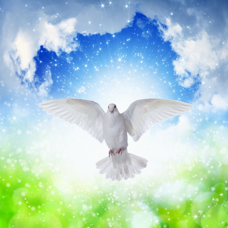 spirits: Holy Spirit came down like white dove, holy spirit dove flies in blue sky, bright light shines from heaven, gospel story
