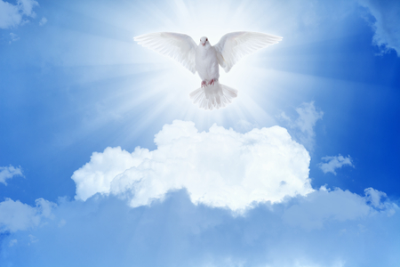 Holy spirit bird - white dove flies in blue sky, bright light shines from heaven Stock Photo