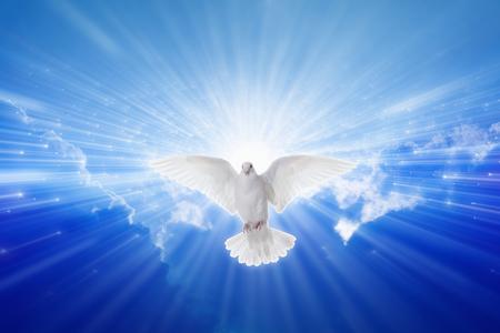 divine: Heilige Geest kwam neer als duif, heilige geest duif vliegt in de blauwe hemel, helder licht schijnt uit de hemel, christelijk symbool, evangelieverhaal