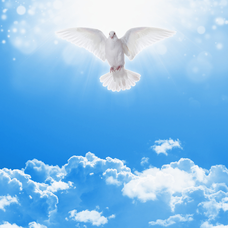 Holy spirit dove flies in blue sky, bright light shines from heaven, christian symbol, holy bible story