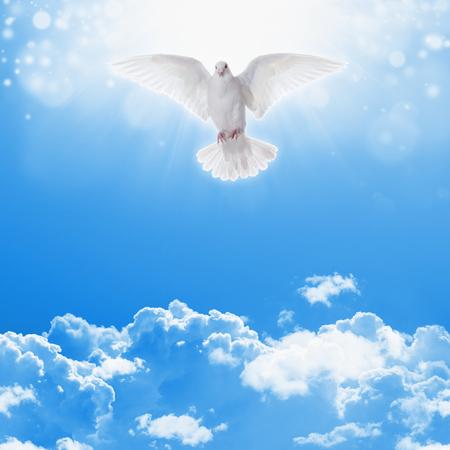 espiritu santo: Santo paloma espíritu vuela en el cielo azul, la luz brillante brilla desde el cielo, símbolo cristiano, historia de la biblia santa