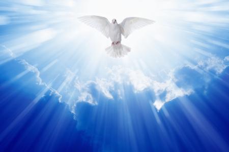 divine: Heilige geest duif vliegt in de blauwe hemel, helder licht schijnt uit de hemel, christelijk symbool