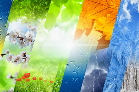 sunny season: Beautiful nature background - four seasons of year collage, vibrant images of different time of year - winter, spring, summer, autumn