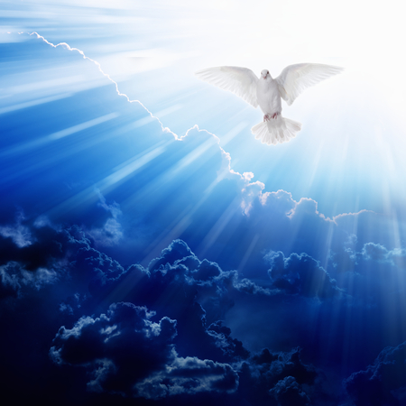 Holy spirit bird flies in blue sky, bright light shines from heaven, flying white dove