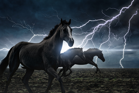 Dramatic nature background - running black horses, bright lightning in dark stormy sky