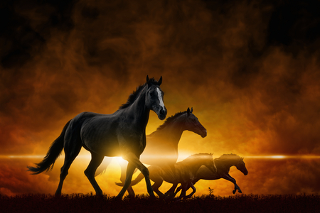 apocalyptic: Dramatic apocalyptic background - four running black horses, red glowing clouds