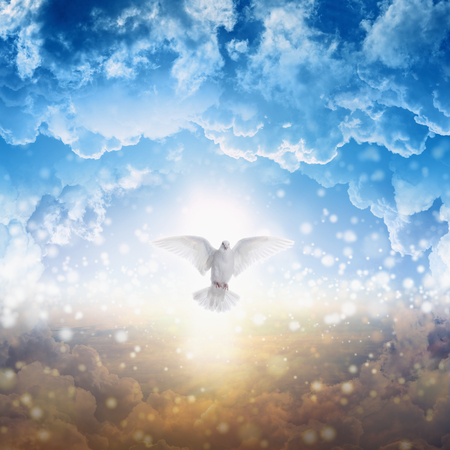 Holy spirit bird flies in skies, bright light shines from heaven, white dove - symbol of love and peace - descends from sky