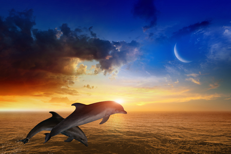 bottlenose: Marine life background - jumping dolphins, beautiful red sunset on sea, glowing horizon and crescent in blue sky.