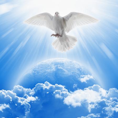 Biały gołębica symbol miłości i pokoju leci nad planetą Ziemia. Zdjęcie Seryjne
